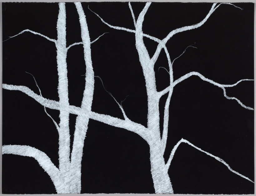 Lyn Horton, Branches white on black #2, 2018, 22 in h x 30 in w, colored pencil on black rag paper