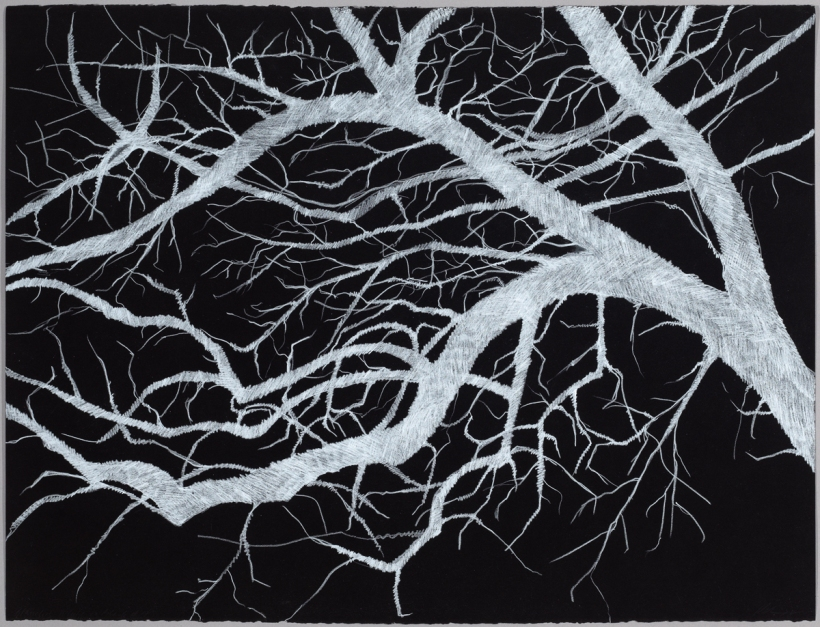 Lyn Horton, Branches white on black #4, 2018, 22 in h x 30 in w, colored pencil on black rag paper