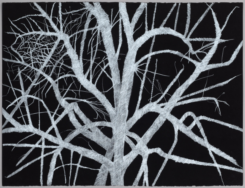 Lyn Horton, Branches white on black #5, 2018, 22 in h x 30 in w, colored pencil on black rag paper