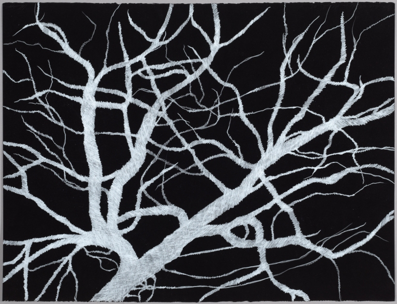 Lyn Horton, Branches white on black #6, 2018, 22 in h x 30 in w, colored pencil on black rag paper