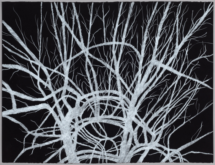 Lyn Horton, Branches white on black #7, 2018, 22 in h x 30 in w, colored pencil on black rag paper