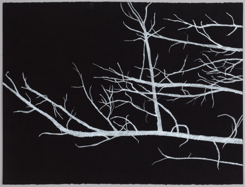 Lyn Horton, Branches white on black #8, 2018, 22 in h x 30 in w, colored pencil on black rag paper